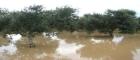Riapertura dei termini di presentazione delle domande di contributo tramite il CO.PRO.DI - Eventi alluvionali del 18 febbraio e 1° marzo 2011